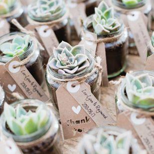 cadeaux invités plante grasse (1)