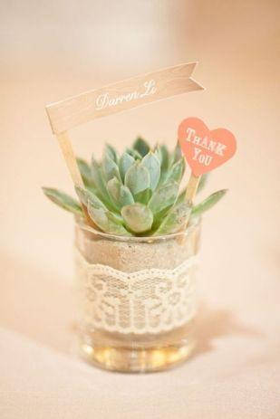 cadeaux invités plante grasse (2)