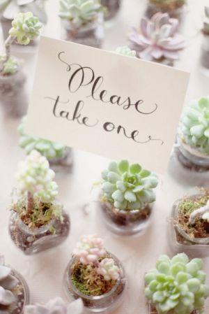 cadeaux invités plante grasse (3)