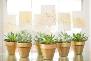 cadeaux invités plante grasse (6)